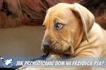 Jak przygotować dom na przybycie psa?