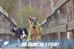 Jak bawić się z psem?