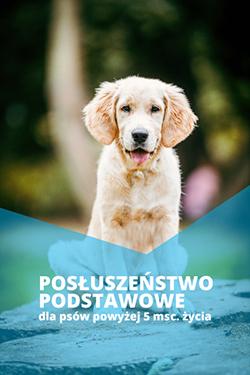Szkolenie podstawowe psa